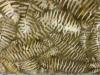 Timeless Treasures Batik Brown Ferns